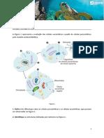ae_sec_bg_modelo_endossimbiotico