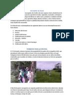 Informe cultivo de maíz orgánico