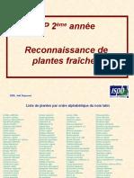 TP Plantes  2008 avec liens HT