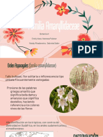 amaryllidaceae