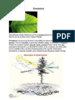 - 175 - biologie - Fotosinteza