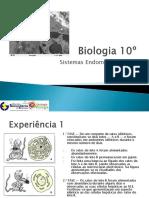 BG11 - Sistemas Endomembranares-Nuno C
