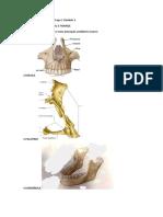 Portifólio de Anatomia M3