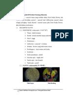 Kumpulan Materi Petrografi