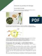 Utilização de Nutrientes na produção de Energia, 6º ano Ciencias