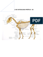 Apostila de osteologia prática 2