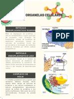 Lista de Organelas celulares