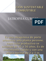 Producción Sustentable De Combustible (Jatropha como alternativa)
