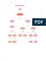 Mapa de Conceitos 3 Sistema Cardiovascular Humano