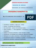 2. DIVISIÓN CYANOPHYTA