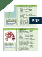 Spirogyra porticalis