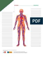 Treffpunktberuf Pflege-kreislauf Wortschatzliste1