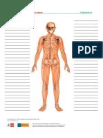 Treffpunktberuf Pflege-skelett Wortschatzliste1