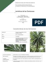 Características de las Zamiaceae