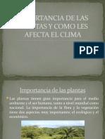 IMPORTANCIA DE LAS PLANTAS Y COMO LES AFECTA EL CLIMA s