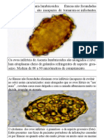 Atlas de Parasitologia - Muito Bom