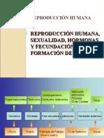 Reproduccion-humana Diapositivas Complem
