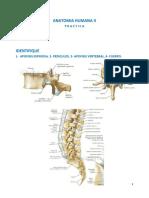 Manual de Practica de Anatomia II (Abdomen, Pelvis_periné y Miembro Inferior)