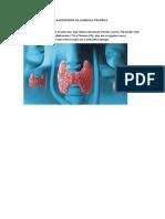 Pesquisa trabalho Biologioa HORMONIOS DA GLÂNDULA TIREOIDEA