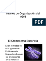 Niveles de Organización del ADN