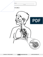El Aparato Respiratorio Lámina Muda Con Alveolos Recursosep