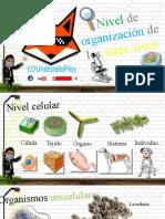 Nivel de organización celular