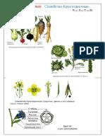 1.4+) Семейства растений