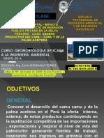 GESTIÓN E IMPACTO AMBIENTAL Y PROYECTO DE INVERSIÓN_CADENA PRODUCTIVA DEL CAMU_CAMU Y DE LA PALMA ACEITERA CAMU  CAMU