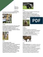 Animales vertebrado1