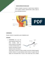 aparato reproductor masculino y femenino 2011 hacer diapositivas
