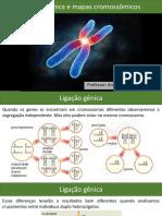 07 - Ligação gênica e mapas cromossômicos