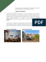 Proyectos Primarios