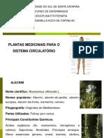 PLANTAS MEDICINAIS PARA O SISTEMA CIRCULATÓRIO