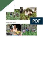 Actividades Agrícolas Xinkas y Garifunas