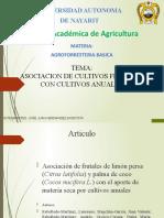 Presentacion Asociacion Limon Persa y Palma Con Cultivos Anuales