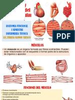 Funcion_y_estructura_del_tejido_muscular