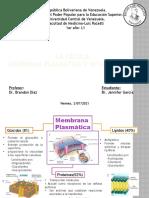 La Célula. Membrana Plasmática