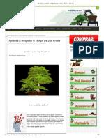 Aprenda a Respeitar o Tempo Da Sua Árvore _ ABC DO BONSAI
