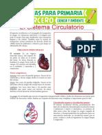 6 Órganos Principales Del Sistema Circulatorio Para Tercero de Primaria