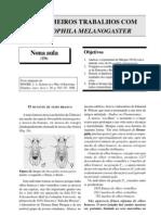 Os Primeiros Trabalhos Com Drosophila Melanogaster