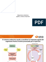 20._Adaptaciones_endocrinas_agudas_y_cronicas_al_ejercicio-2_3