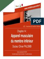 Appareil musculaire MI