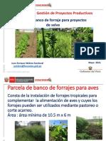Banco Forrajes