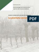 Dossier Piantata Veneta