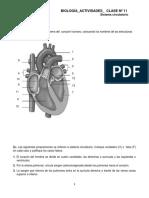 Biol-Act-Clase11 Sistema circulatorio