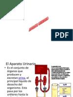 aparatourinario-100523202029-phpapp02