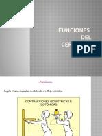 Funciones_DEL_CEREBELO
