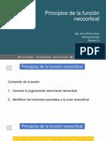 Clase 6. Principios de La Función Neocortical