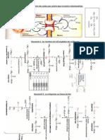 TSTL.bioch.cours .Chap.4.Metabolisme.v.documents
