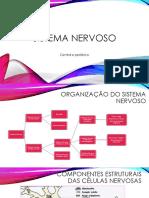 Aula 3 - Sistema Nervoso Autônomo 2021-03-10